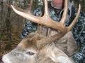 northwest_ontario_deer_12