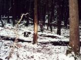 deer6-jpg